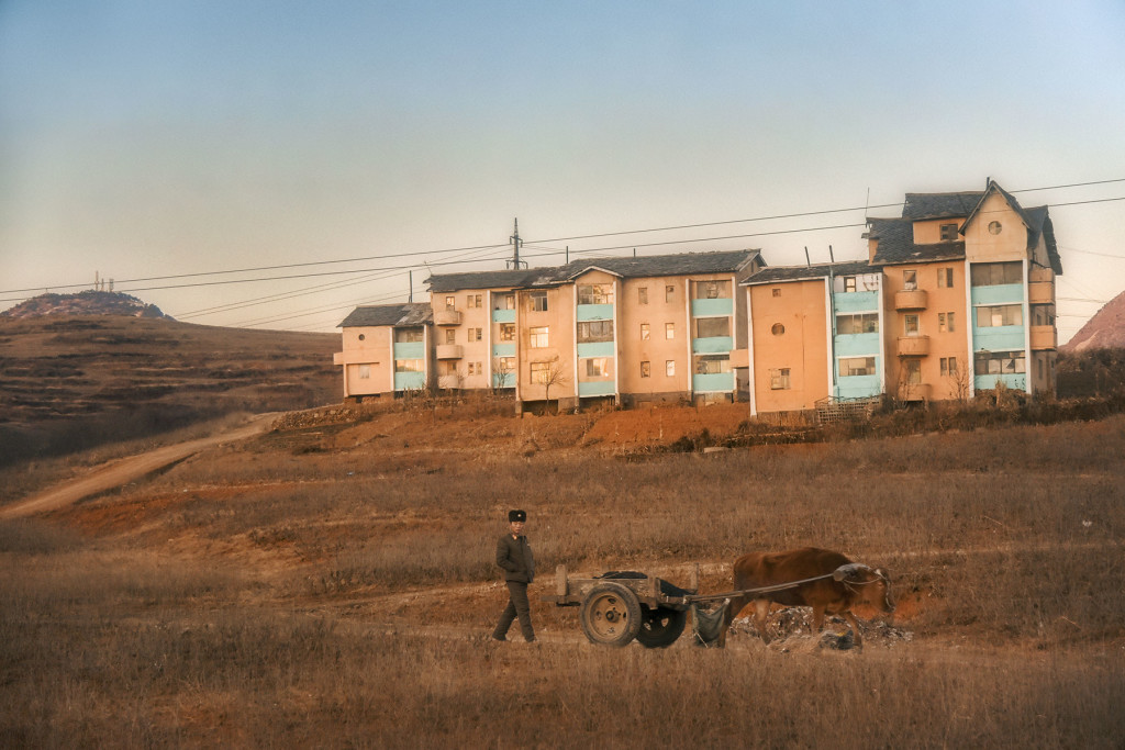 A soldier trails an ox cart against a hillside of apartments in North Hwanghae Province.